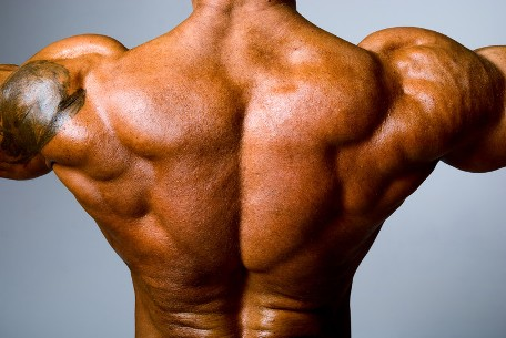 Sus Roid Muscle Mass