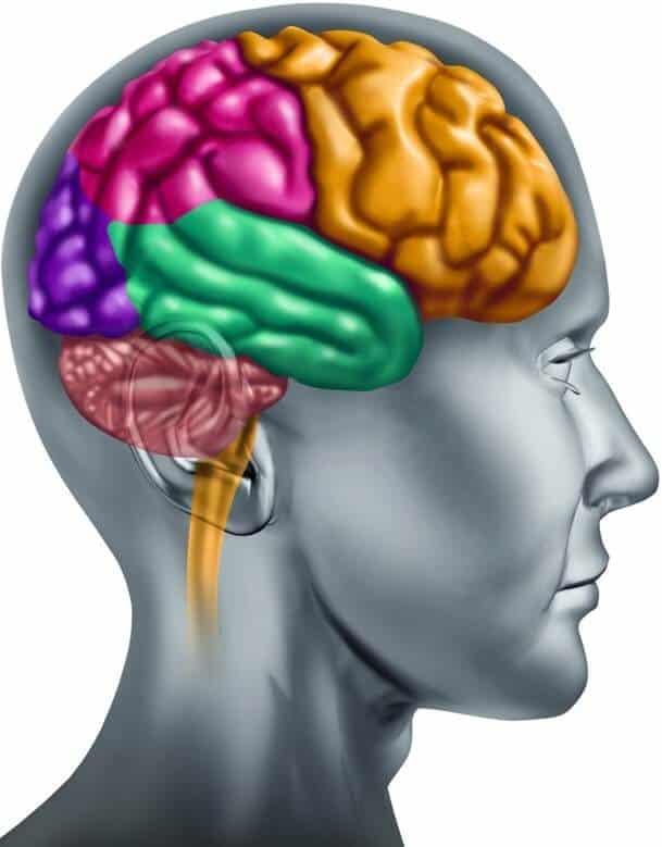 Qualia Brain Supplements
