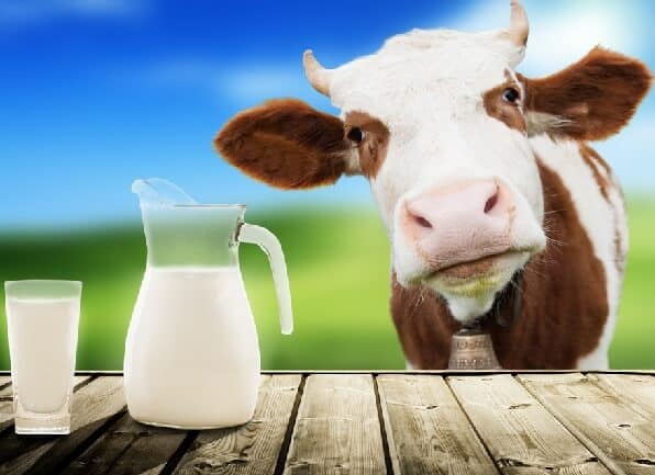 Cow's Milk Protein